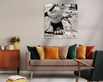 Schildpad, Galapagos van Marit Lindberg
