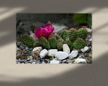 Kaktus von Patricia Piotrak