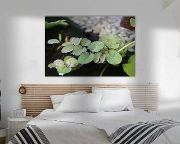 Wasserpflanzen im Terrassenteich von Debby Frijn