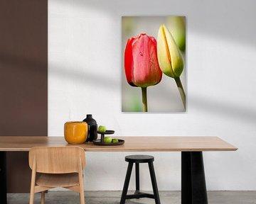 Tulpenliefde von Peter Vruggink