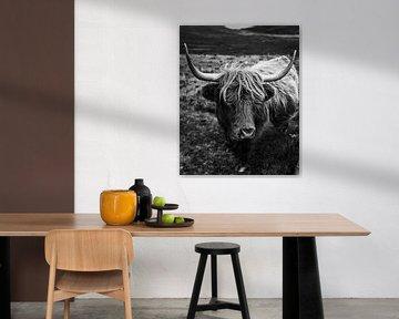 Isle of Skye | Highland rund | Schotland landschap fotografie | Fine art | Art print Art Print van Sander Spreeuwenberg