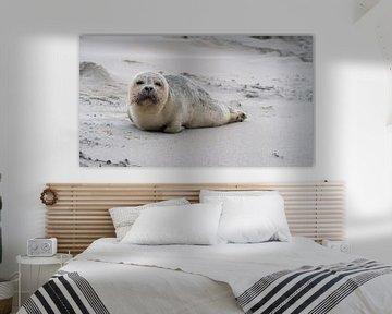 Seehund von BVpix
