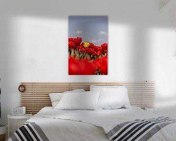 Gele tulp in rode tulpenveld van Dana Schoenmaker