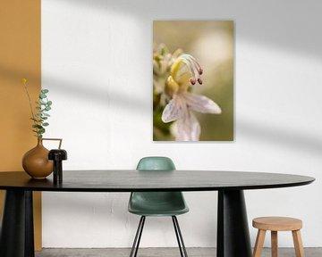 Lila Blume von Ilona van der Burg
