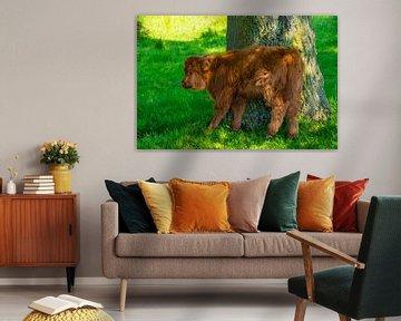 Kalf van een Schotse Hooglander schuurt tegen een boom van FotoGraaG Hanneke