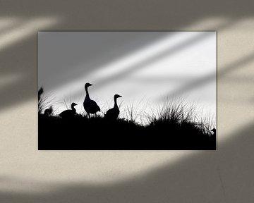 Graugänse Silhouette von Lars van der Sanden