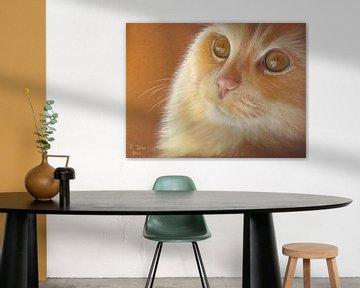 Katzenaugen von Renate Dohr
