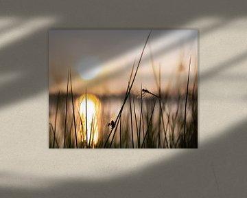 libellen en juffers part 1 van Tania Perneel