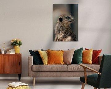 Meerkat van Oliver Hackenberg