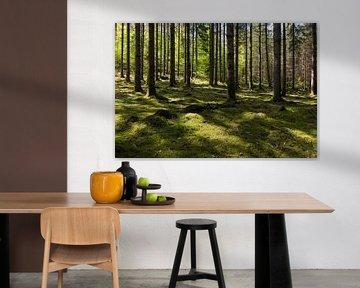 Licht en schaduw in de bossen in Wallonië (liggend) van Kelly De Preter