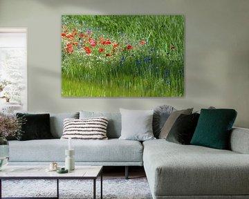 Mohnblumen / Mohnblumen von Henk de Boer