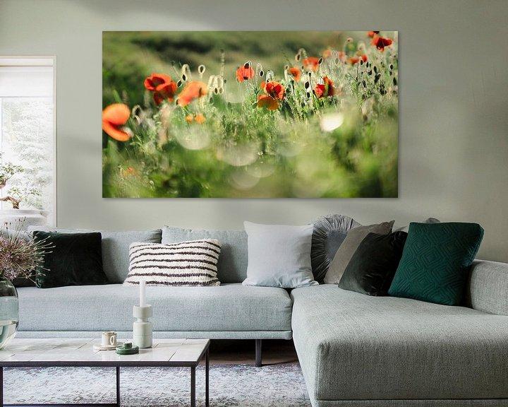 Sfeerimpressie: Stralende klaprozen in het zonlicht van Fotografiecor .nl