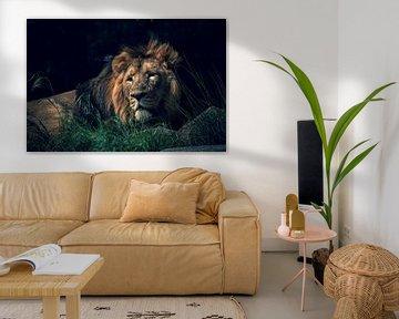 Le lion majestueux émergeant de l'obscurité. sur Joeri Mostmans
