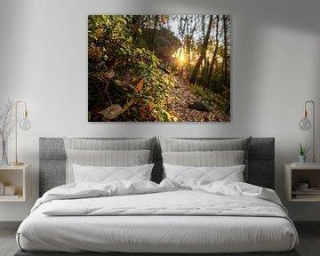 Großer Zschirnstein in der Sächsischen Schweiz – Herbstlicher Sonnenuntergang von Pixelwerk