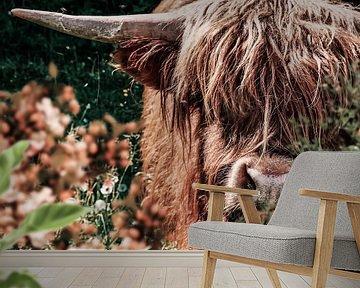 Schotse Hooglander van Bert Hooijer