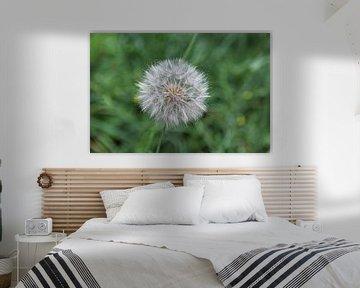 Pusteblume von Flowers by t.ART