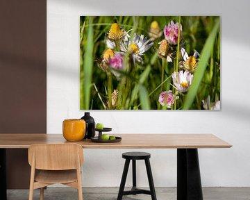 Blumenwiese von Flowers by t.ART