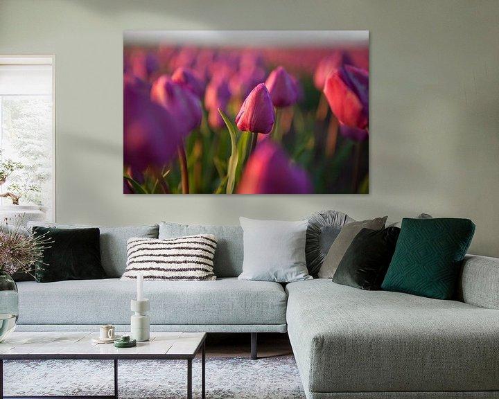 Beispiel: Rote Tulpen auf dem Feld von Flowers by t.ART
