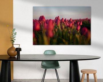 Tulpenfeld am Abend von Flowers by t.ART