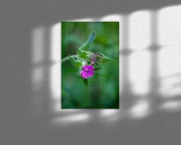 Frühlingsblüte von Flowers by t.ART