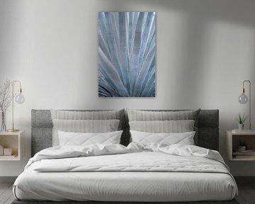 Blaugraue Blätter der Agavenpflanze