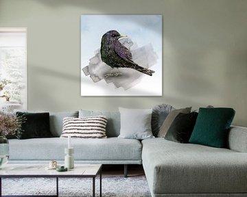 Een aquarel tekening van een spreeuw van Bianca Wisseloo