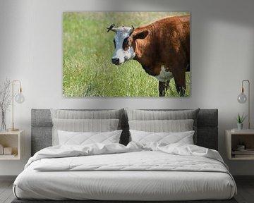 Bruine koe / Brown cow