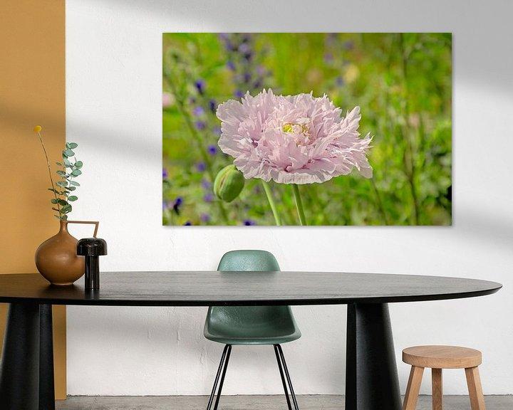 Impression: Pavot rose bulbeux sur Kristof Lauwers