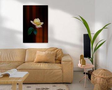 gelbe rote Rose mit Fantasie Hintergrund orange von Ribbi The Artist