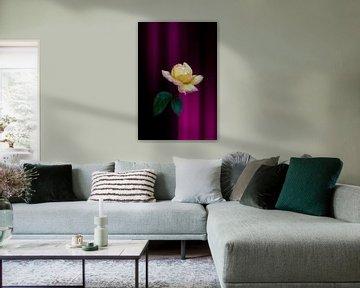 gelbe rote Rose mit Fantasie Hintergrund rosa von Ribbi The Artist