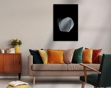 In der dunklen Serie Pebbles 'Zum Aufklappen von Lynlabiephotography