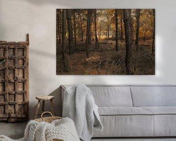 Blick in Wald in Herbstfarben von Klaartje Majoor
