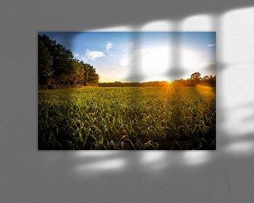 Maisfeld bei Sonnenuntergang von Ingrid Born