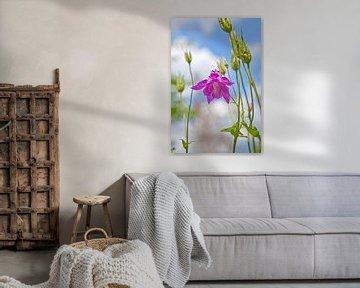 Zarte Blüte auf der Frühlingswiese von Flowers by t.ART