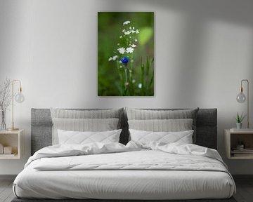 Kornblume auf der Wiese von Flowers by t.ART