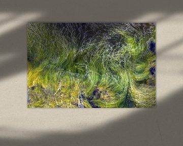 Kelp - groene algen in de Oostzee van arte factum berlin