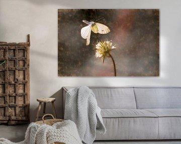 De vlinder en de bloem van Foto Amsterdam / Peter Bartelings