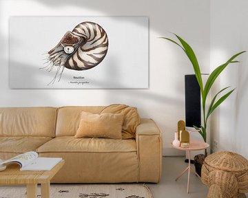 Nautilus van Urft Valley Art