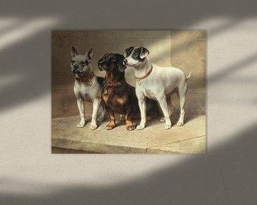 Drei wachsame Hunde