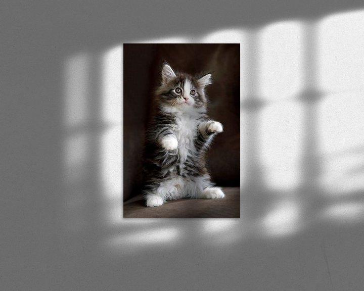Beispiel: Maine Coon Kätzchen von Edwin Butter