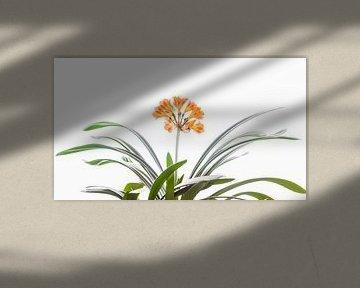 Blume in orange von Thomas Heitz