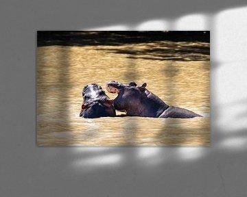 Nijlpaard van Photo By Nelis