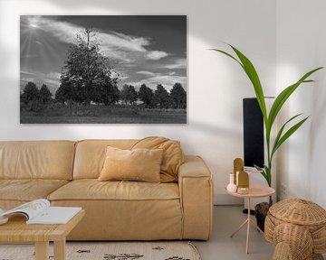 Bomen in zwart wit van Jose Lok