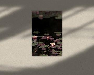 Waterlelie's (1) van Mayra Pama-Luiten