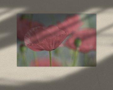 Dromerig zachtroze bloem van JM de Jong-Jansen