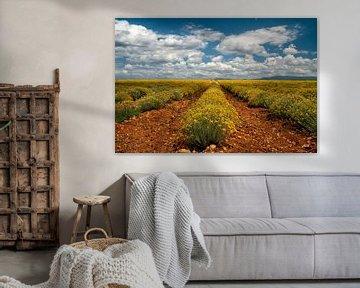 Flowering under the Sky van Lars van de Goor