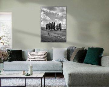 De Cipressen van Toscane - zwart wit van Teun Ruijters
