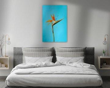 Paradiesvogelblume von Atelier Meta Scheltes