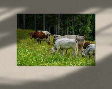 Kühe im Sommer auf der Alm von chamois huntress