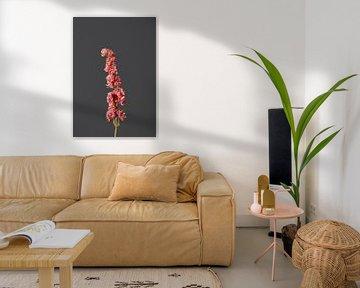 Rosa Trockenblume von michel meppelink